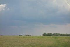 Rainy sky backgound stock photography