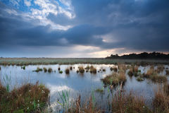 Rainy sky over swamp in summer Royalty Free Stock Photo