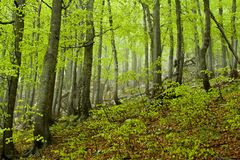 Rainy spring forest, Croatia Stock Photos