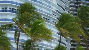 Rainy summer day wind blowing palm tree miami beach 4k usa stock video footage