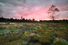 Rainy sunrise over forest meadow Stock Photo