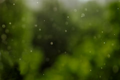 Rainy texture. Bokeh lights and Falling rain drops on a green background. Stock Image