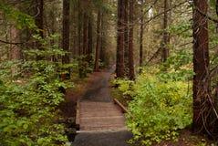 Rainy trail Stock Image
