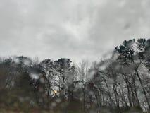 Rainy trees royalty free stock photo