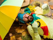 Rainy weather forecast concept. Man bearded lay on wooden background with leaves top view. Fall season attributes. Hipster wear knitted hat and gloves expect stock images
