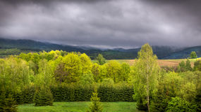 Rainy weather over forest Royalty Free Stock Photo