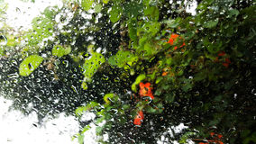 Rainy wet window plants. Water rain wet overcast window wash storm plant green flowers orange Royalty Free Stock Photos
