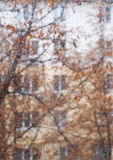 Rainy window. Window covered with rain drops on dull autumn day with view of orange leaves and building behind the window outdoors. Main focus on drops with Royalty Free Stock Photography