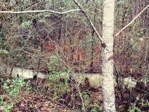 Rainy woods Royalty Free Stock Photography