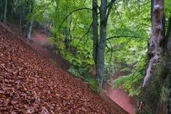 RainyForest Στοκ εικόνα με δικαίωμα ελεύθερης χρήσης