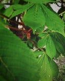rainyweather φύλλα φύσης πράσινα στοκ εικόνα με δικαίωμα ελεύθερης χρήσης