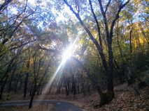 Raio de sol através das árvores de Forrest na queda imagem de stock