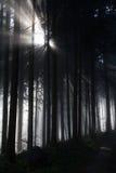 Raio de sol na floresta escura Imagens de Stock Royalty Free