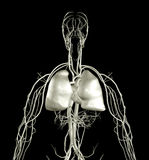 Raio X do coração e do pulmão Fotos de Stock