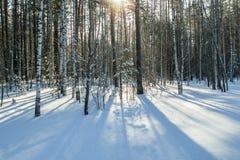 Raio do sol da geada do inverno da floresta da neve da manhã Foto de Stock