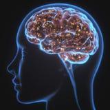 Raio X poderoso do cérebro da mente Imagem de Stock
