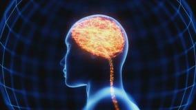 Raio X poderoso do cérebro da mente ilustração royalty free