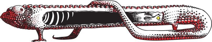Raio X do Chameleon Fotografia de Stock