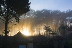Raios da luz solar mágica nas madeiras de pinho enevoadas no nascer do sol Fotos de Stock