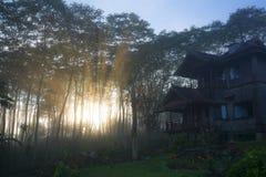 Raios da luz solar mágica nas madeiras de pinho enevoadas no nascer do sol Fotografia de Stock