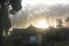 Raios da luz solar mágica nas madeiras de pinho enevoadas no nascer do sol Fotos de Stock Royalty Free