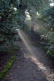 Raios de luz através das árvores Fotografia de Stock