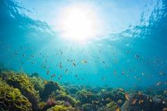 Raios de luz solar que brilham no mar, vista subaquática fotografia de stock royalty free