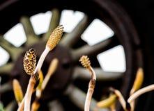 Raios de madeira da roda do trator automotivo antigo do vintage com plantas pequenas fotos de stock royalty free
