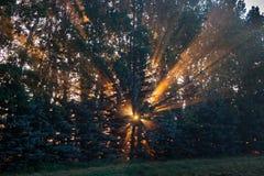 Raios de sol alaranjados através das árvores no nascer do sol Imagens de Stock