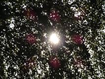 Raios de sol através das folhas da árvore Foto de Stock Royalty Free
