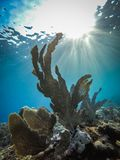 Raios de sol e opiniões corais de Curaçau do fã imagens de stock