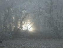 Raios de sol fracos que brilham através da névoa na floresta fotografia de stock