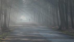 Raios de sol na névoa forte na floresta, Polônia filme