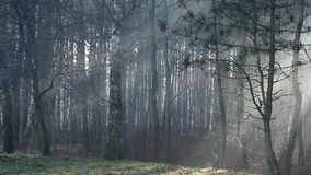 Raios de sol na névoa forte na floresta, Polônia video estoque