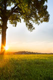 Raios de sol românticos Foto de Stock Royalty Free