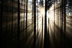 Raios de Sun Foto de Stock