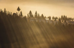 Raios de Sun Fotografia de Stock Royalty Free