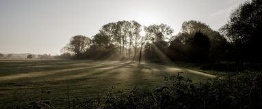 Raios de Sun através das árvores no nascer do sol fotos de stock royalty free