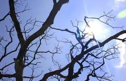 Raios de Sun com ramos de árvore inoperantes sombrios Foto de Stock Royalty Free