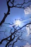 Raios de Sun com ramos de árvore inoperantes sombrios Imagens de Stock