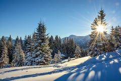 Raios de Sun no país das maravilhas do inverno fotografia de stock