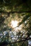 Raios de Sun sobre árvores Fotos de Stock Royalty Free