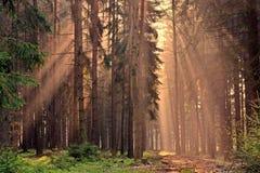 Raios do nascer do sol através das árvores fotos de stock royalty free