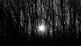 Raios do sol de ajuste do inverno através das árvores Fotos de Stock