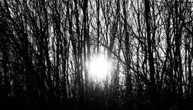 Raios do sol de ajuste do inverno através das árvores Fotografia de Stock