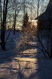 Raios do sol do inverno do ajuste Fotos de Stock Royalty Free