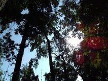Raios encantadores do sol imagens de stock