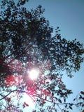 Raios encantadores do sol fotografia de stock royalty free