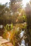 Raios mornos claros do sol sobre a lagoa Fotos de Stock