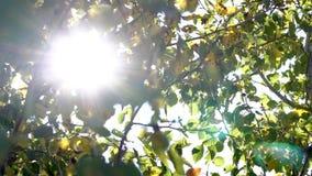 Raios solares através das árvores vídeos de arquivo